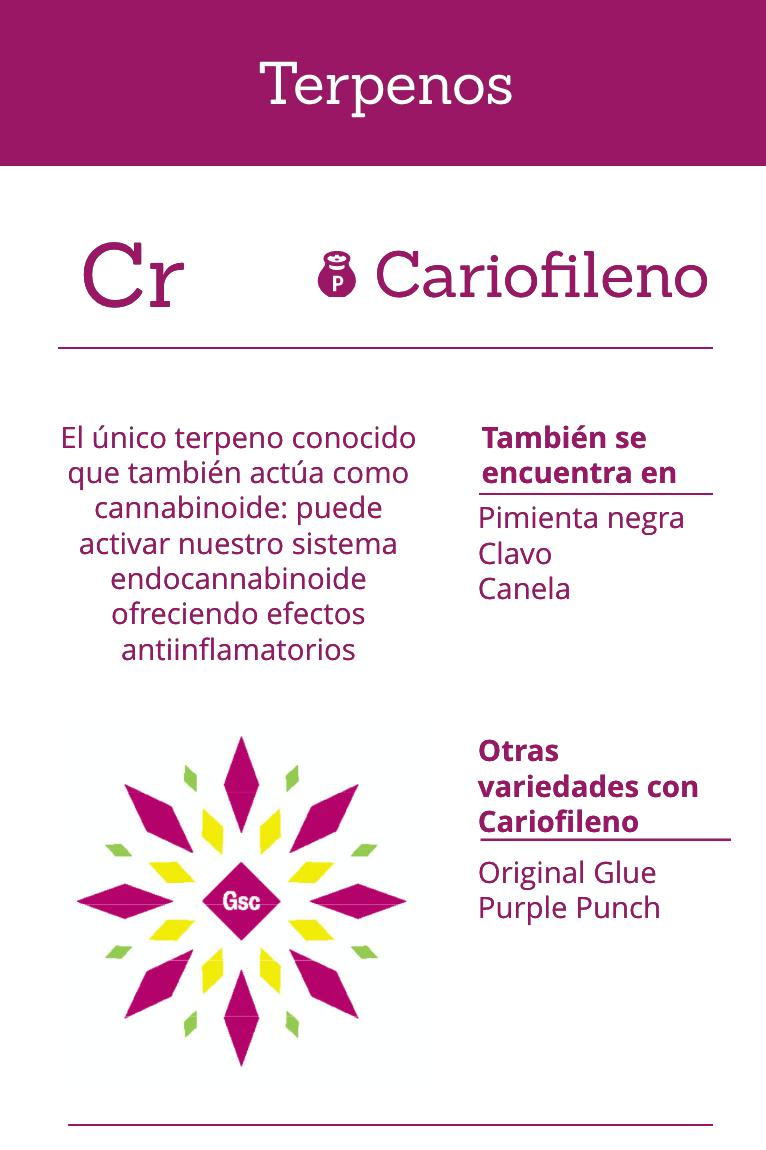 cariofileno terpeno